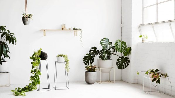 Scandi Design Trends You Can Add To Your Next Project scandi design trends Scandi Design Trends You Can Add To Your Next Project NONAGON style n9s indoor house plant green garden white eco 597x336